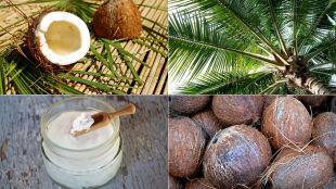 Olej kokosowy nie taki zdrowy