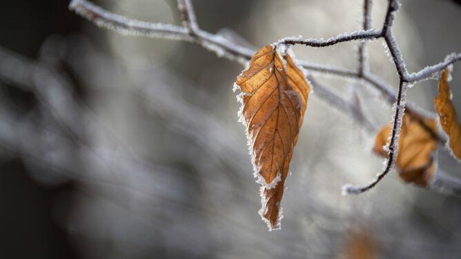 Pogoda na dziś: lokalnie śnieg i śnieg z deszczem, do 6 stopni