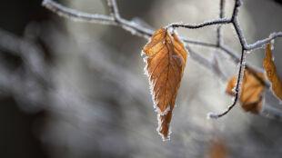 Pogoda na jutro: nocą mróz do 6 stopni, w dzień lokalnie popada śnieg
