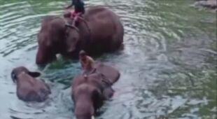 Ciężarna słonica zmarła w Indiach